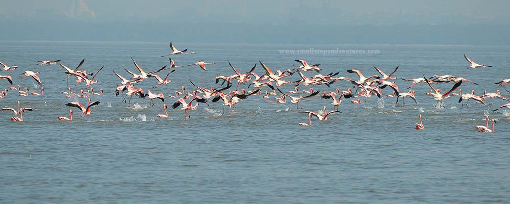 flamingo-tour