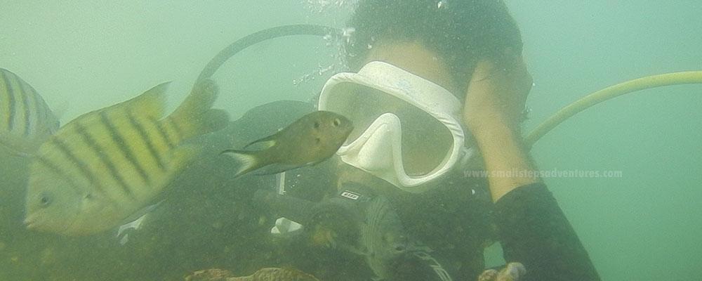 scuba diving tarkarli
