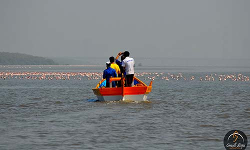 Bird tour in thane creek